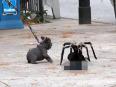 giant spider attacks visitors video